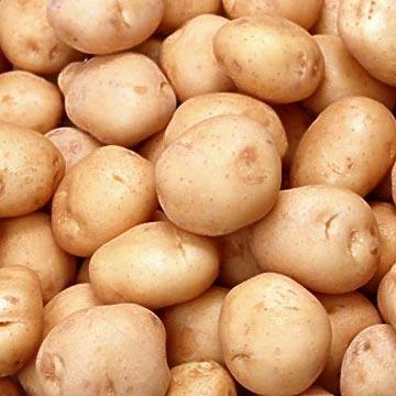 burgonya, krumpli